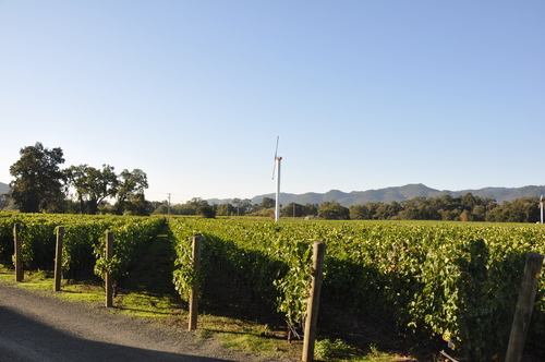 State LaneVineyard Vines - Summer 2011
