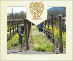 Vineyard Management Philosophy