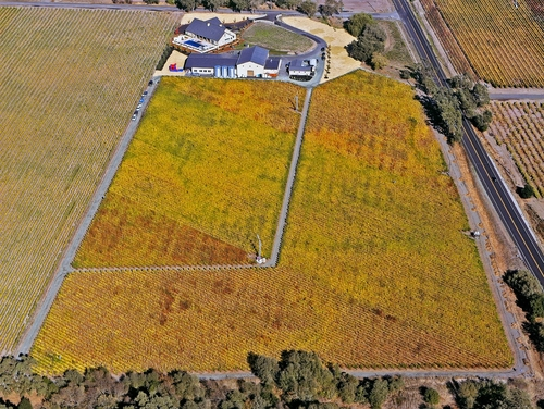 Aerial view of our 20 acre State Lane Vineyard