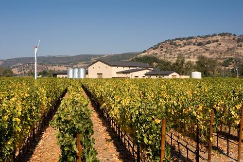 Winery view through block 5 Merlot