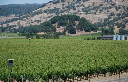 Vineyard view through block 4 Cabernet Sauvignon