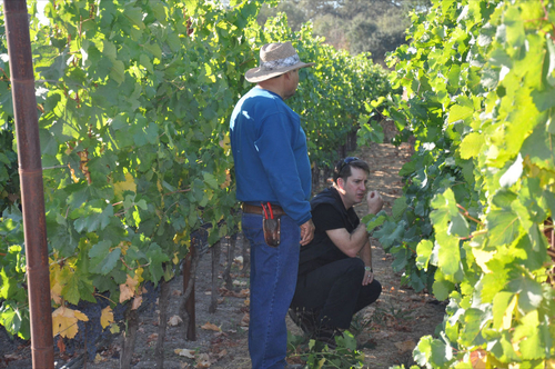 Louis and Ramon checking out the Vineyard